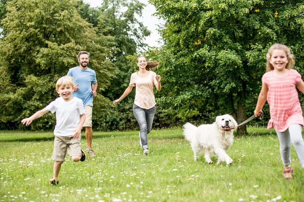 pies z rodziną na trawniku